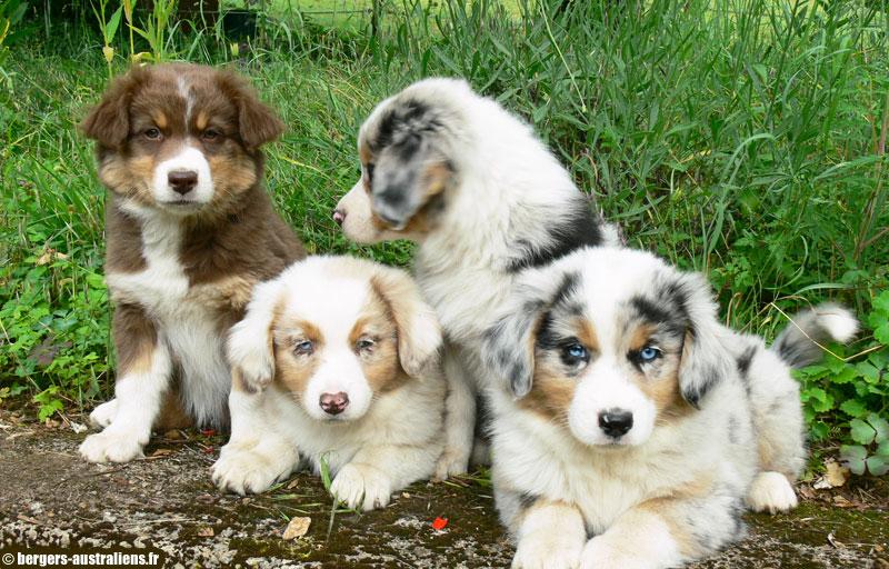centrale canine de l'ain
